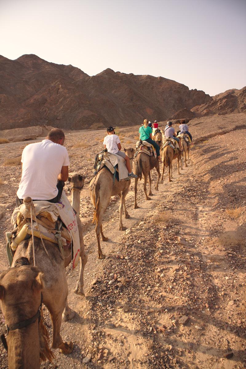 All the wonderful things - Israel Traveldiary #2 - Eilat, das Beste von Wüste & Meer; Die Wüste Negev Camel Ranch