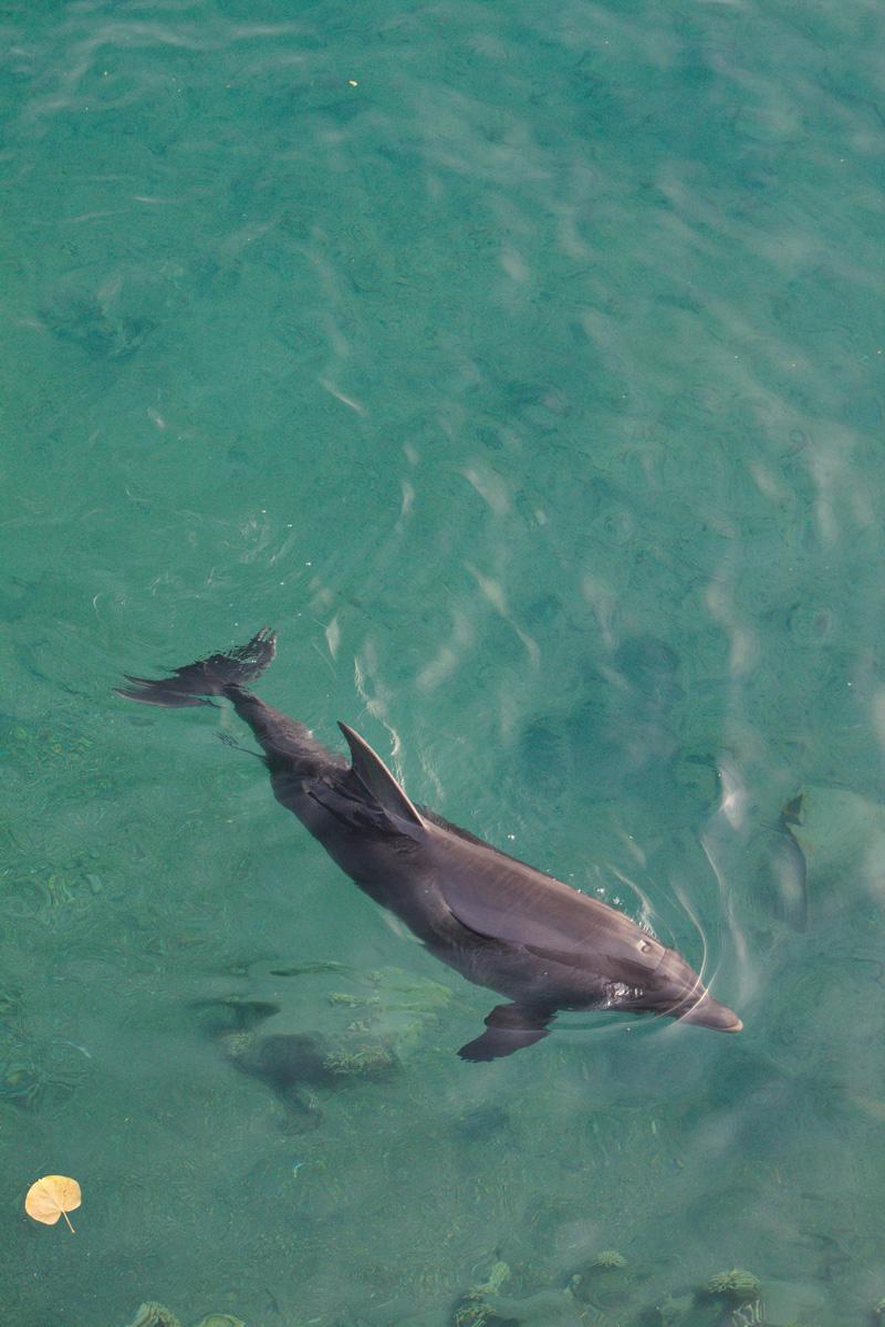 All the wonderful things: Israel Traveldiary #2 - Eilat, das Beste von Wüste & Meer; Das Rote Meer Dolphin Reef