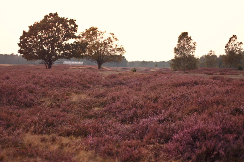 All the wonderful things: Ausflug in die Lüneburger Heide