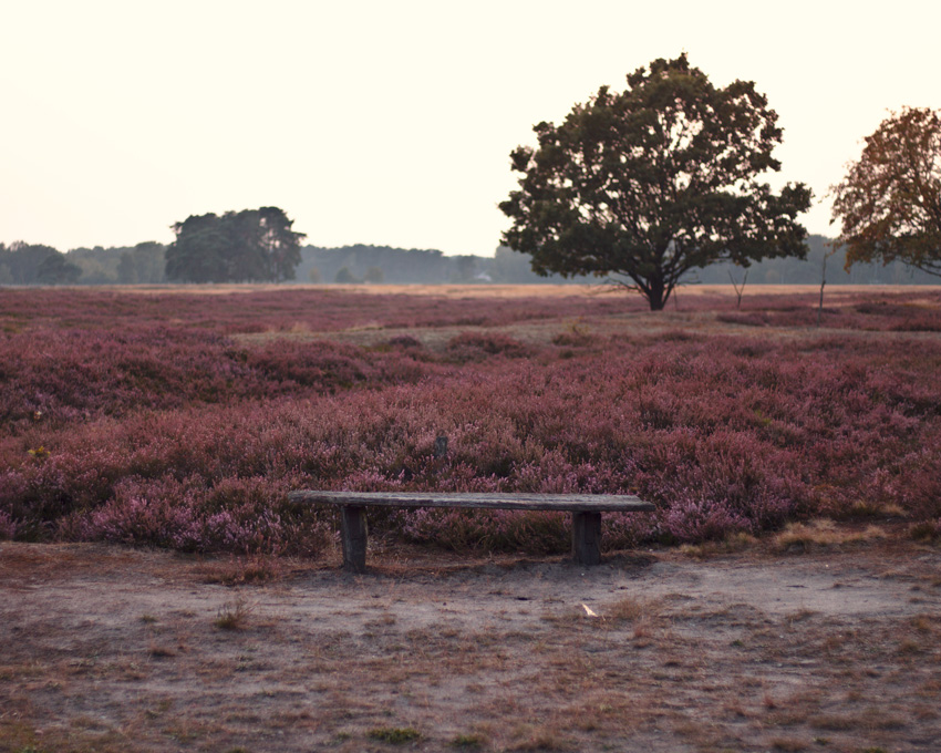 All the wonderful things: Ausflug in die Lüneburger Heide - Pietzmoor